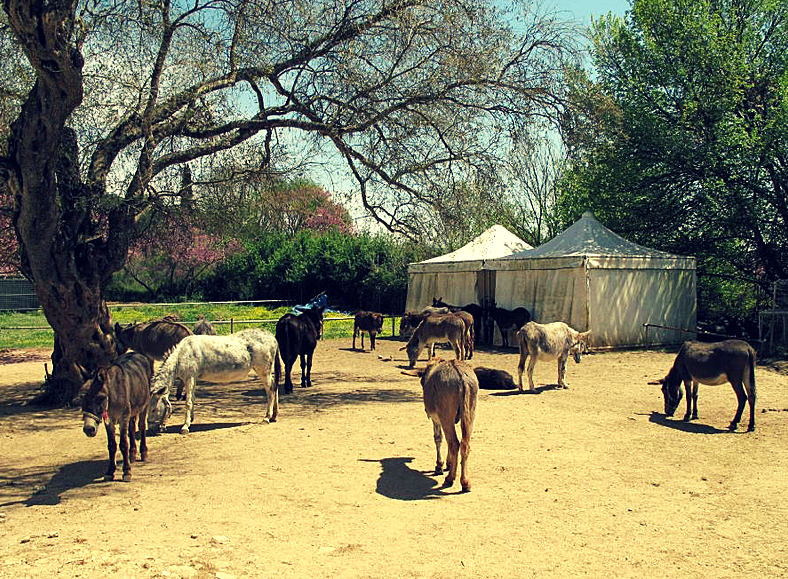 donkeys sanctuary