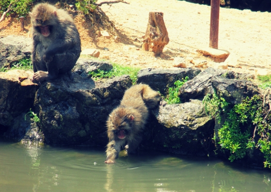 Monkeys at the lake