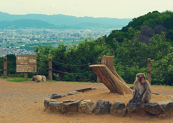 top of the hill Arashiyama