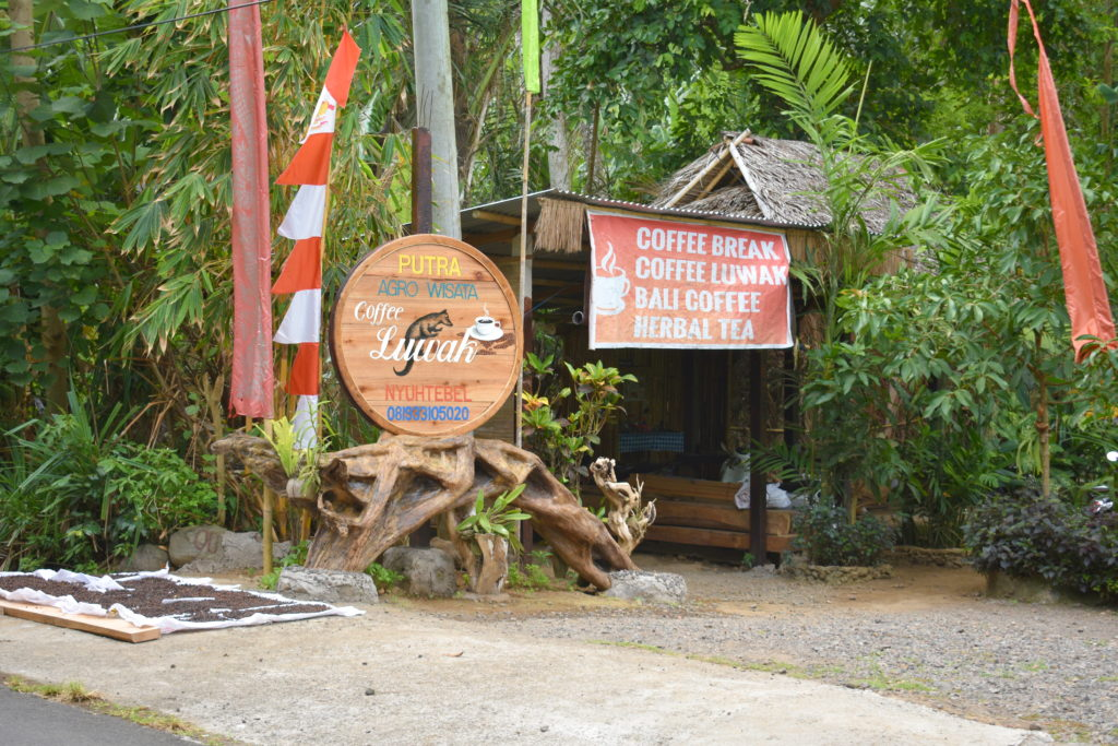 coffee luwak