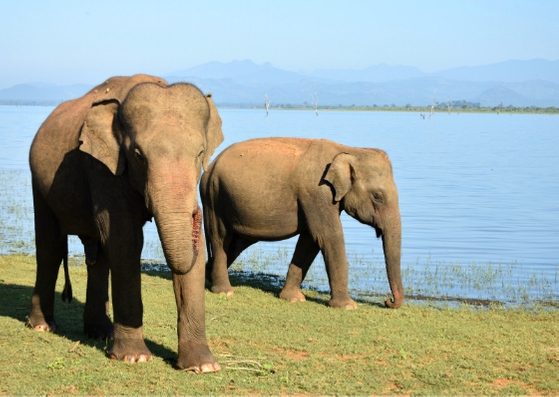 elephants at Udawalawe