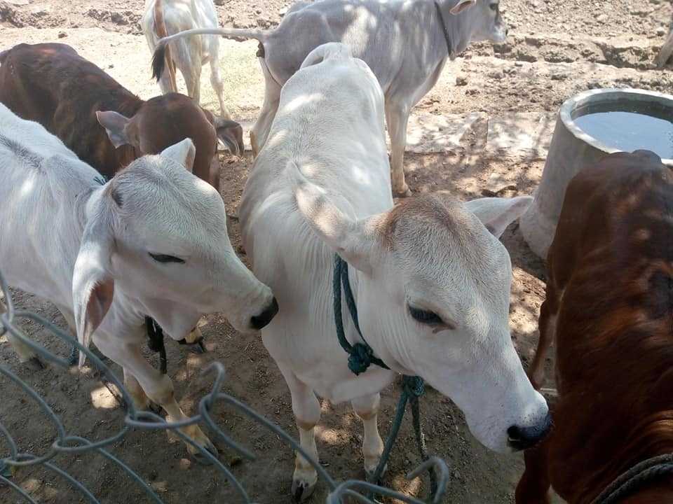 dairy farm in india