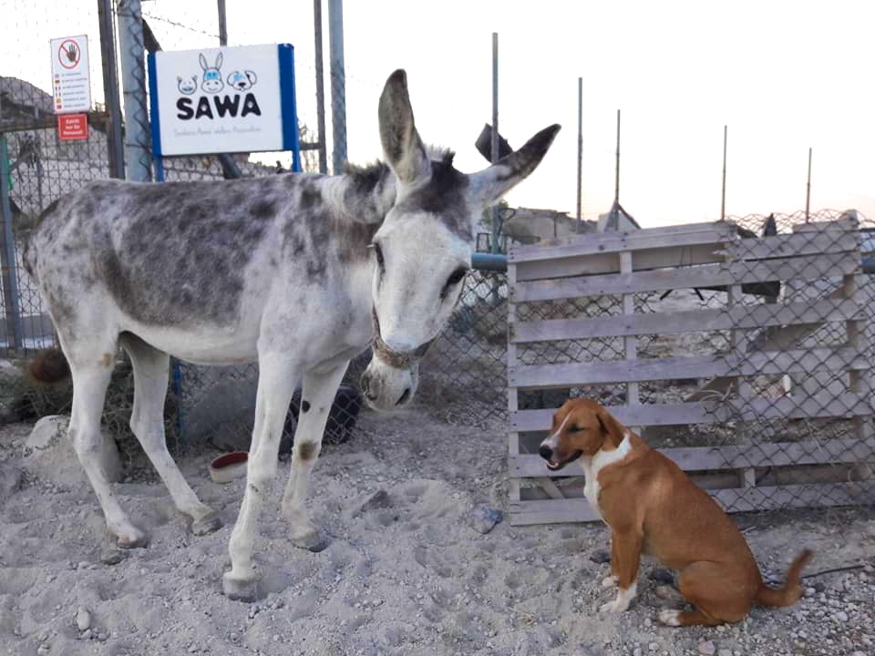 sawa rescue center in santorini